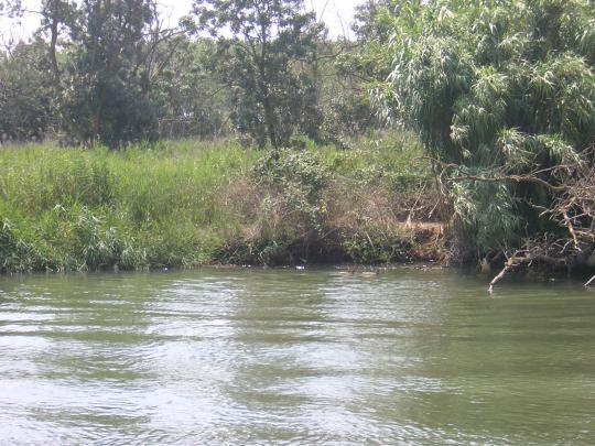 Riu Fluvià i Illa Caramany, Reserva Integral