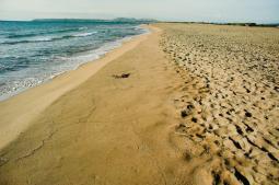La platja a l'estiu del 2006